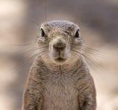 Squirrel surprise Stock Photos