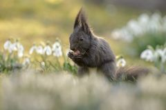 Spring squirrel Royalty Free Stock Images