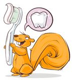 Squirrel and toothbrush. Protein with a toothbrush and thoughts to clean teeth Stock Image