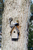 Squirrel on top of Birdhouse Stock Image