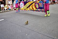 Squirrel trapped in a parade stock photo