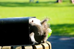 Squirrel in the trash stock images