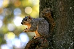 Squirrel on tree Stock Photo