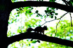 Squirrel on tree branch Royalty Free Stock Images