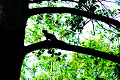 Squirrel on tree branch Stock Image