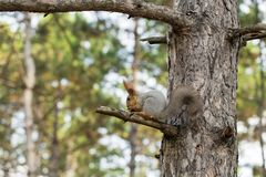 Squirrel on tree branch. Squirrel in nature stock photos