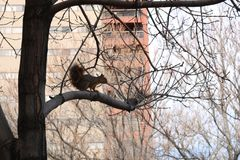The squirrel on the tree stock photography