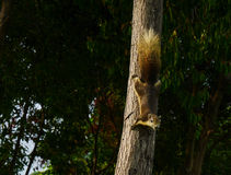 Squirrel on the tree Stock Photos
