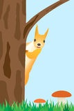Squirrel on the tree. Royalty Free Stock Images