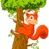 Squirrel on the tree. Illustration of very cute squirrel climbs a tree Royalty Free Stock Photography