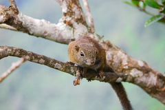 Squirrel on tree Stock Image