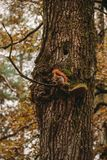 A squirrel on the tree. royalty free stock photo