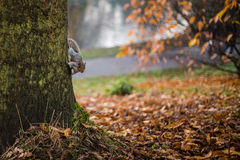 Squirrel on a tree. In park Stock Image