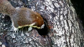 Squirrel on tree at public park. stock footage