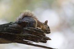 Squirrel on tree Stock Photo