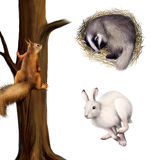 Squirrel on a tree, sleeping badger, running hare. Isolated realistic illustration on white background Stock Photos