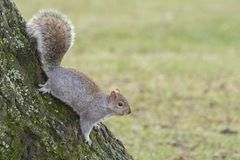 A squirrel on a tree stock photo