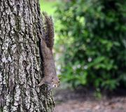 Squirrel on a tree trunk stock photo