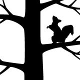 Squirrel on the tree. Stock Photography