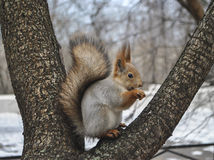 Squirrel Stock Images