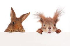 Squirrel  and two rabbit Royalty Free Stock Photo