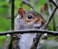 Squirrel up close. Stock Photo