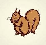 Squirrel. Vector drawing Royalty Free Stock Photos