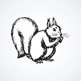 Squirrel. Vector drawing. Adorable young eurasian bun sitting on light backdrop. Freehand linear dark ink hand drawn picture logo sketchy in art scribble retro Royalty Free Stock Photography