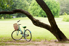 Squirrel and Vintage bicycle in the green park Royalty Free Stock Photography
