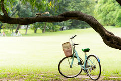 Squirrel and Vintage bicycle in the green park Stock Photography