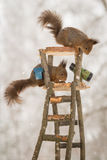 Squirrel watch tower Stock Photo