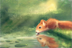 Squirrel at the water. / digital painting / illustration Stock Images