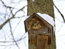 Squirrel Winter Home Stock Photo