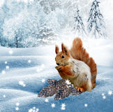 The squirrel in the winter woods. New Year card Royalty Free Stock Images