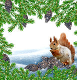 The squirrel in the winter woods. Stock Photos