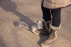 Squirrel on the woman shoes royalty free stock photos