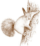 Squirrel in the wood Royalty Free Stock Photo