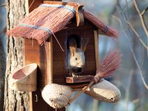 Squirrel in the Zoo in Novosibirsk. Seating in little house stock photography