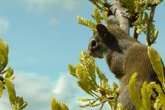 squirrelly Stockbild