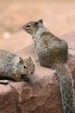 Squirrels. Stock Photo