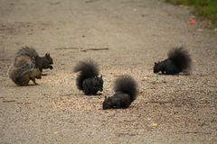 Squirrels breakfast party stock photos