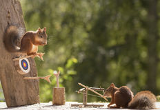 Squirrels with a catapult and Target Stock Images