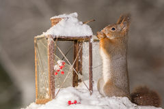 Squirrels christmas Royalty Free Stock Photography