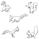Squirrels in different positions. Pencil sketch by hand Royalty Free Stock Photos