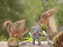 Squirrels with an elephant Stock Photos