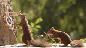 Squirrels holding a catapult with Target Stock Photo