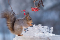 Squirrels ice sculpture Stock Photography