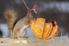 Squirrels ice stand Royalty Free Stock Photography