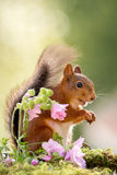 Squirrels look Royalty Free Stock Photos