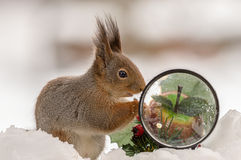Squirrels magnification glass Royalty Free Stock Photography